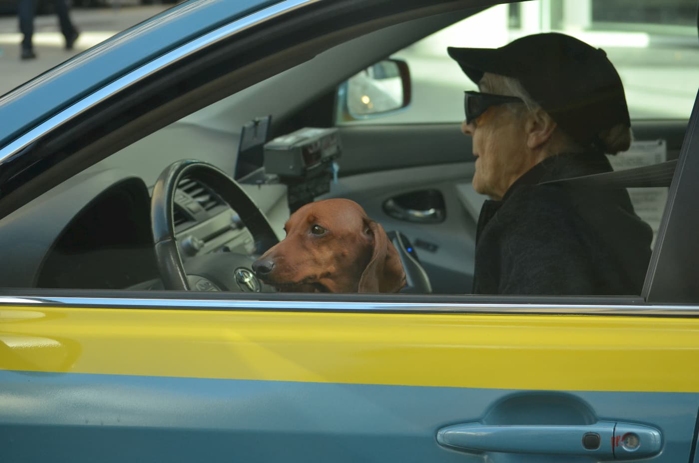 A senior driver traveling with her dog